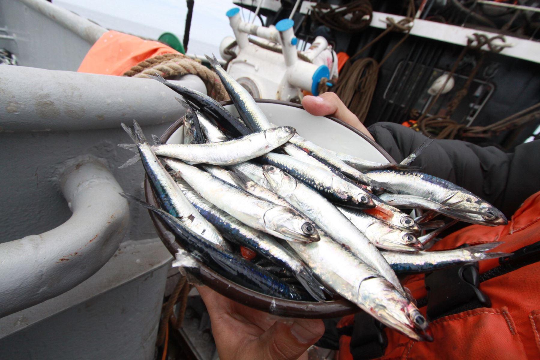 Pesqueras reducirán sus pérdidas tras el éxito de la primera temporada de pesca