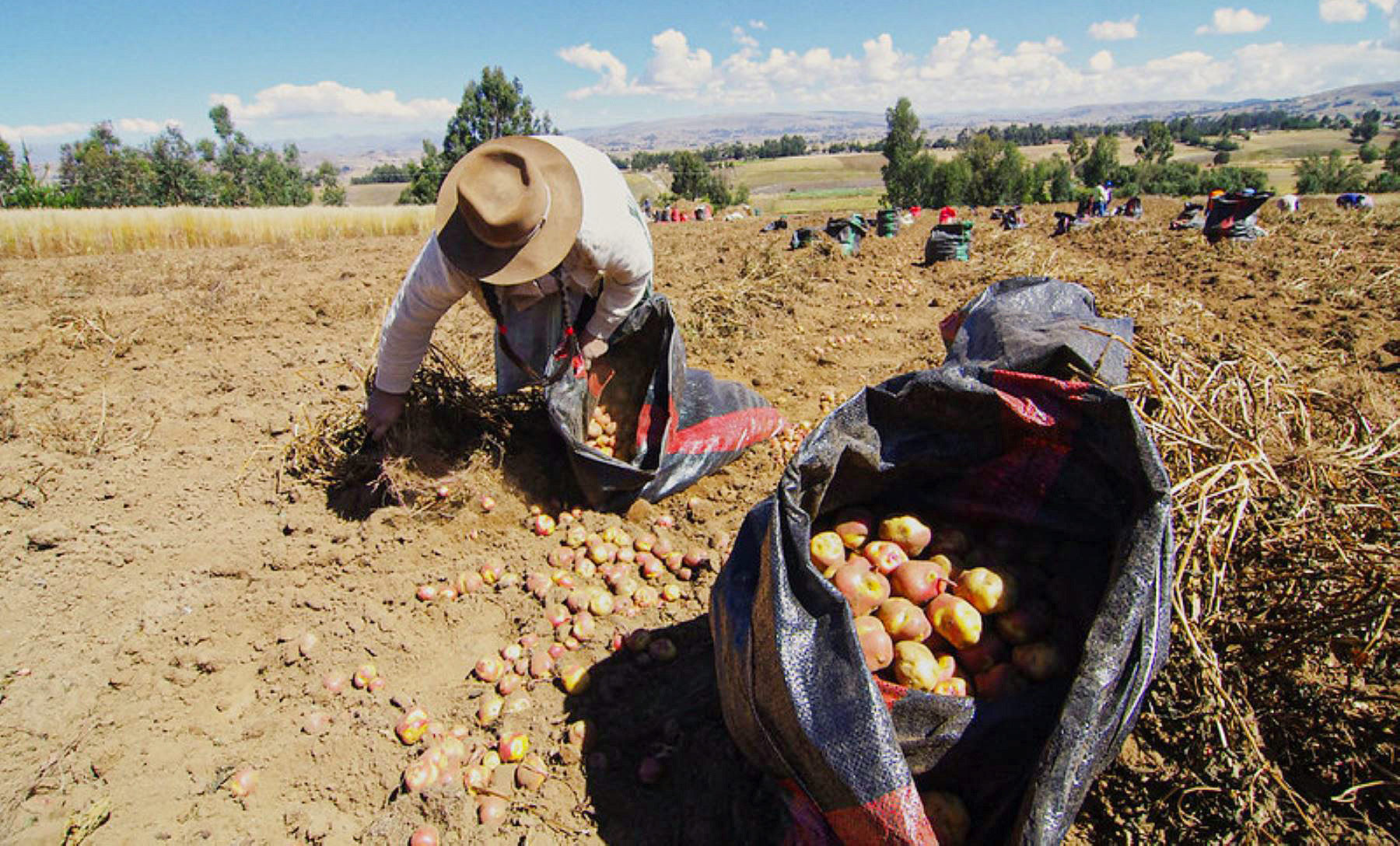 Perú Compite: FAE-Agro impulsará acceso al crédito a nuevos productores