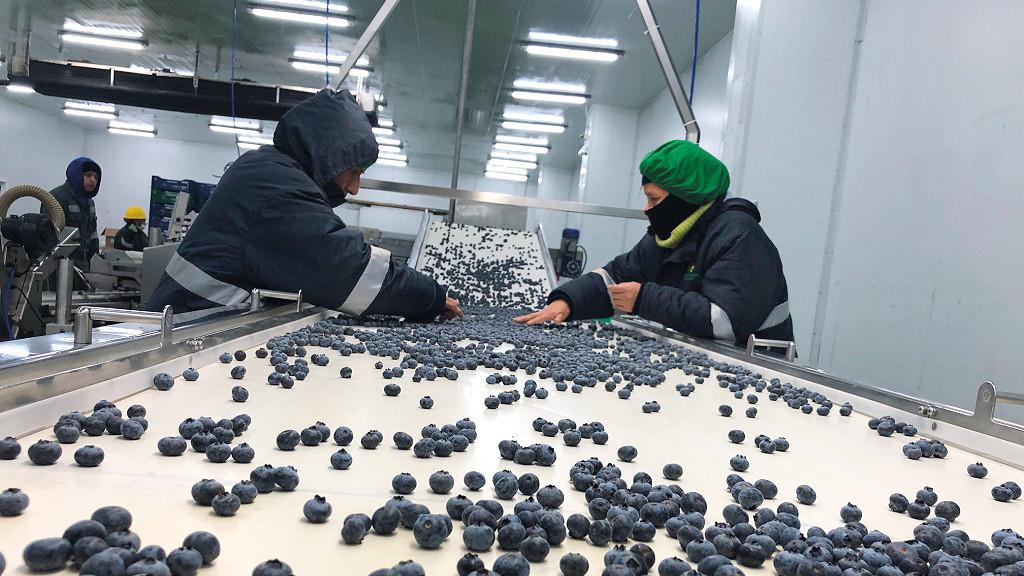 las-empresas-agroexportadoras-apuestan-por-consolidar-sus-destinos-y-diversificar-sus-productos