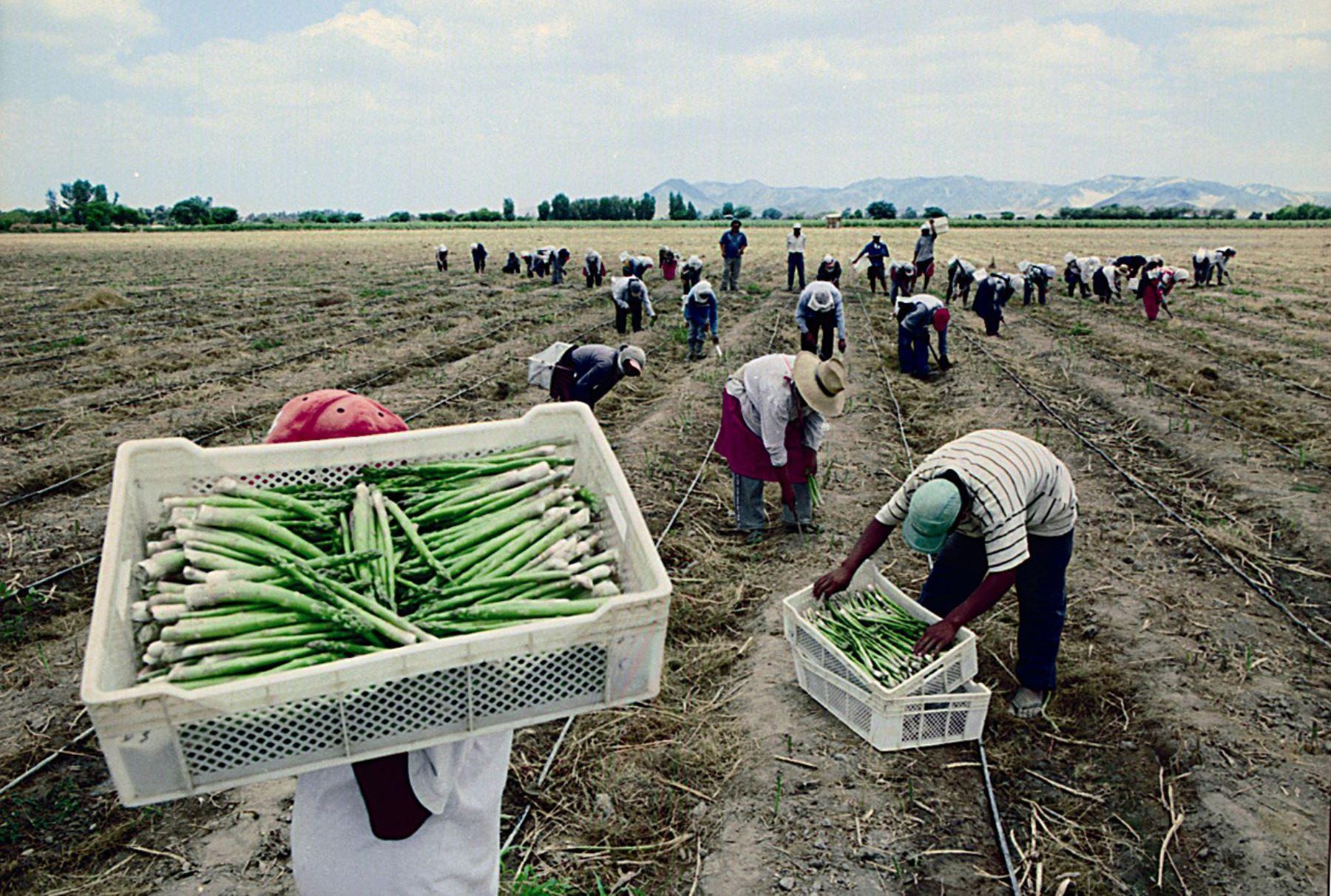 Derogatoria del régimen laboral agrario y el punto de no retorno