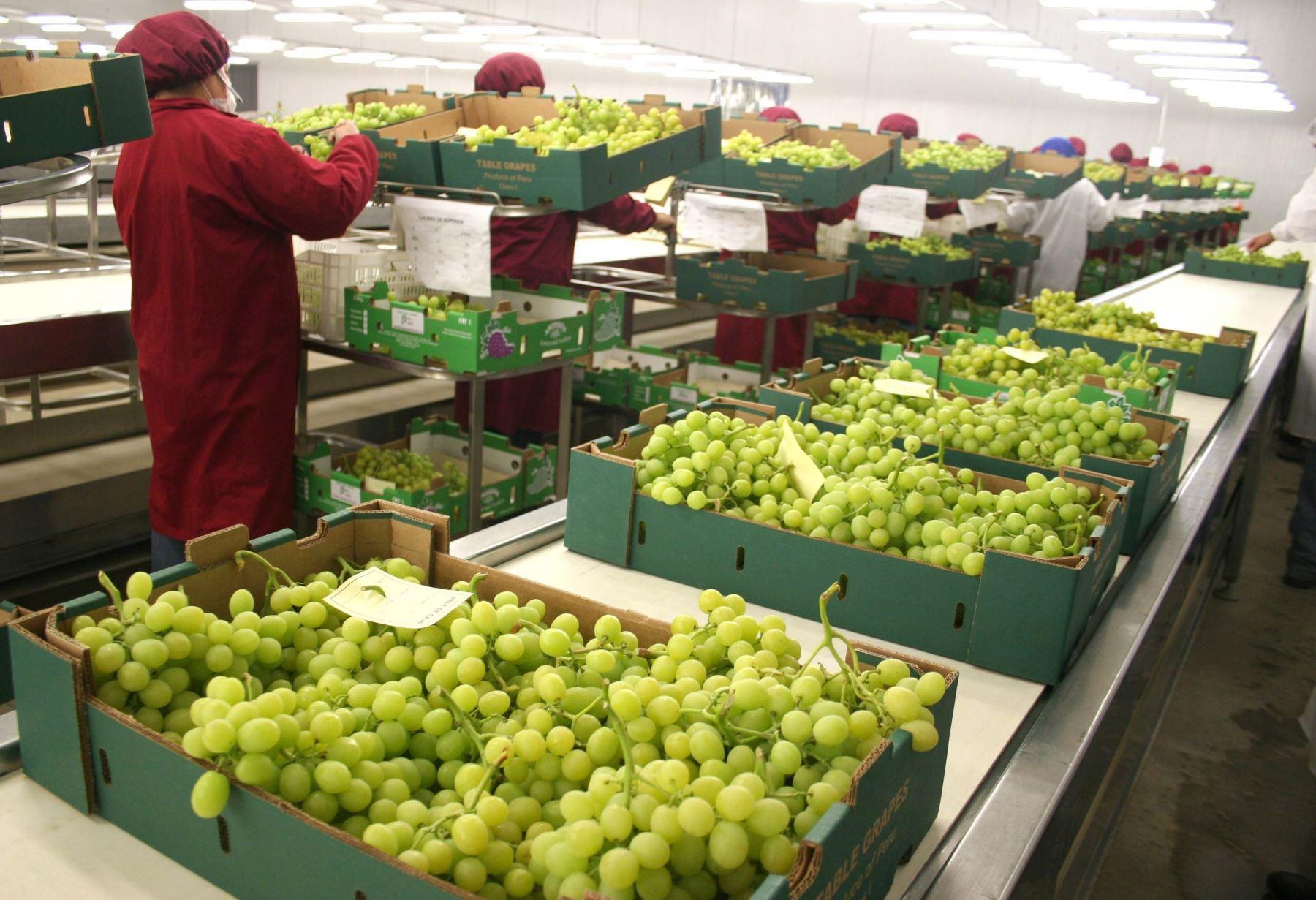 nueva-ley-agraria-mef-propone-que-ir-para-agroexportadoras-aumente-de-modo-gradual-desde-20-a-partir-de-2022