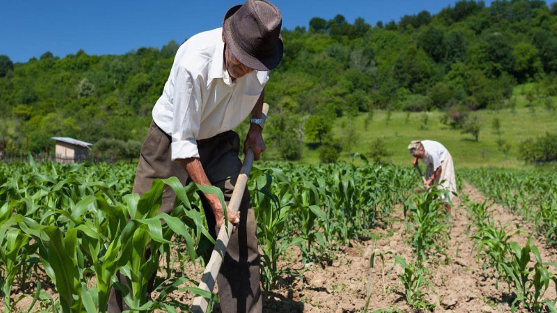Nueva Ley de Promoción Agraria: una oportunidad para fortalecer el sector