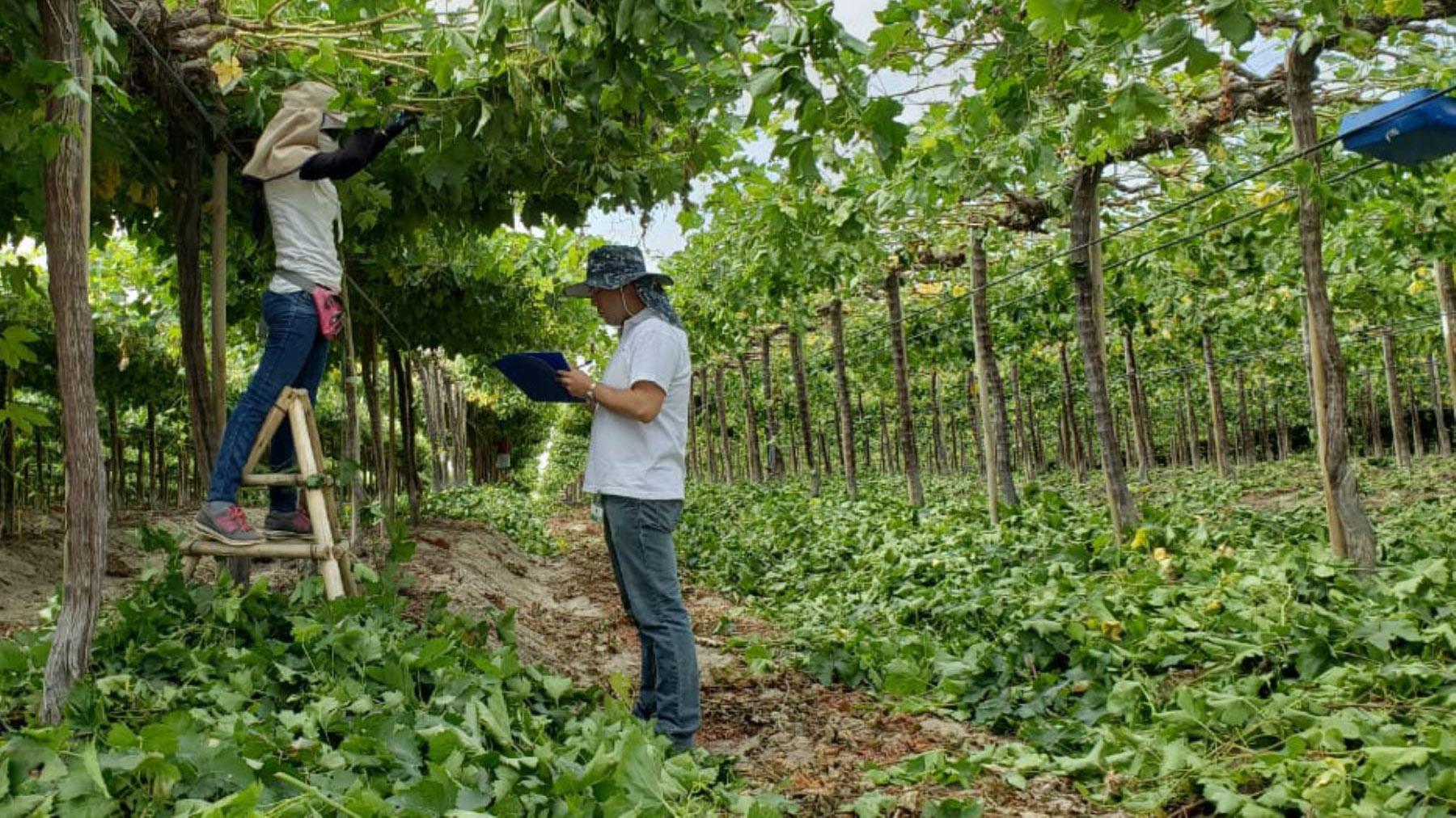 Perú Compite: ¿Ley de incentivos al sector agrario?