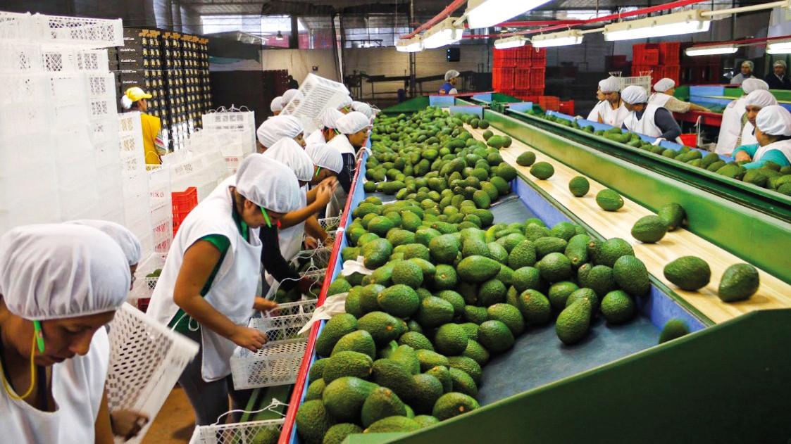 La nueva ley de promoción agraria incentivará mayores fusiones en el sector agroexportador