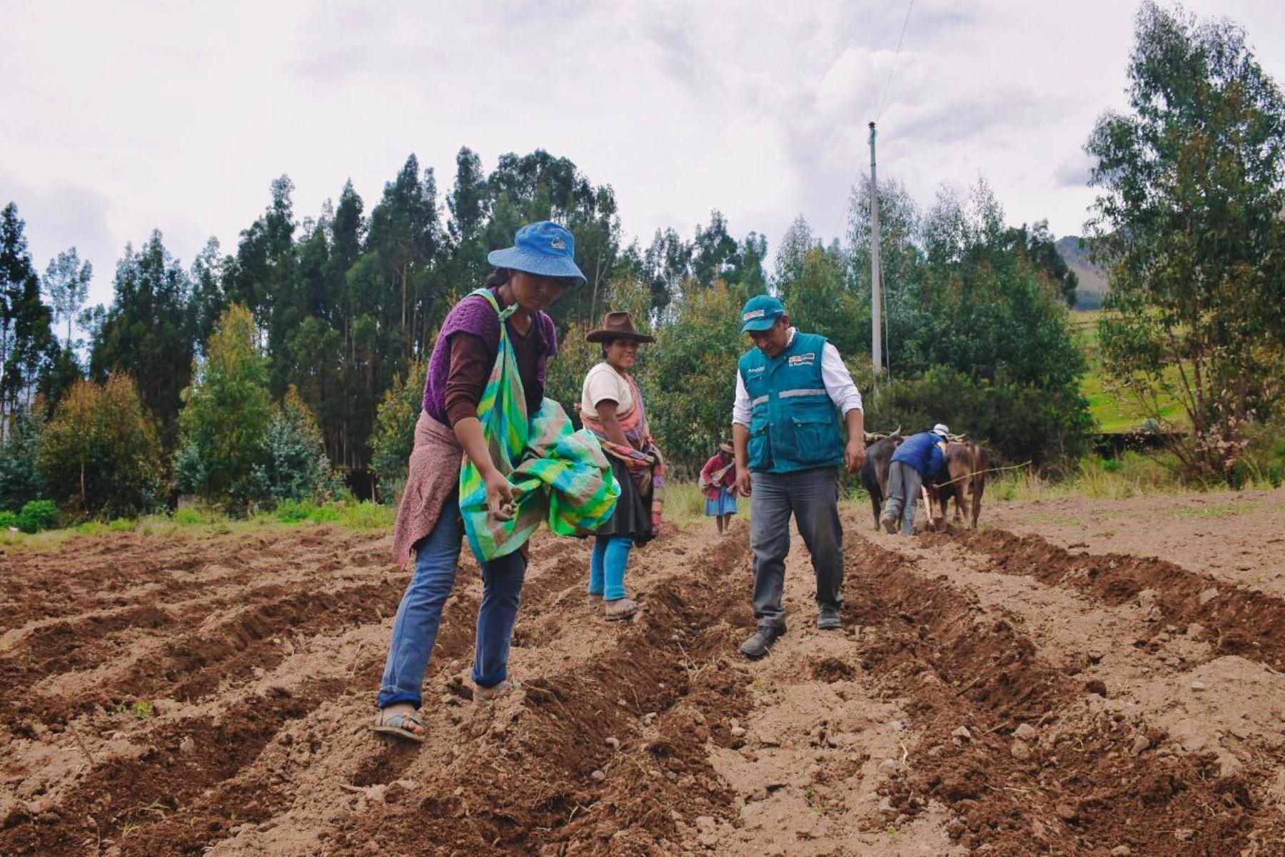 agroexportadoras-podran-usar-services-para-contratar-trabajadores-suplentes