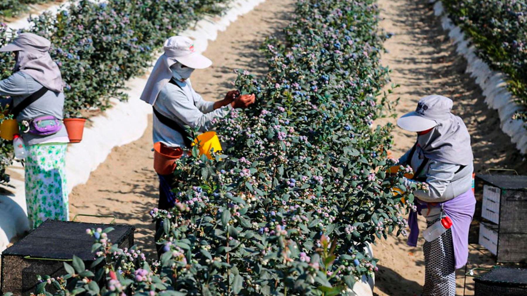 <p>Reglamento de la nueva ley agraria generaría más costos para las empresas</p>