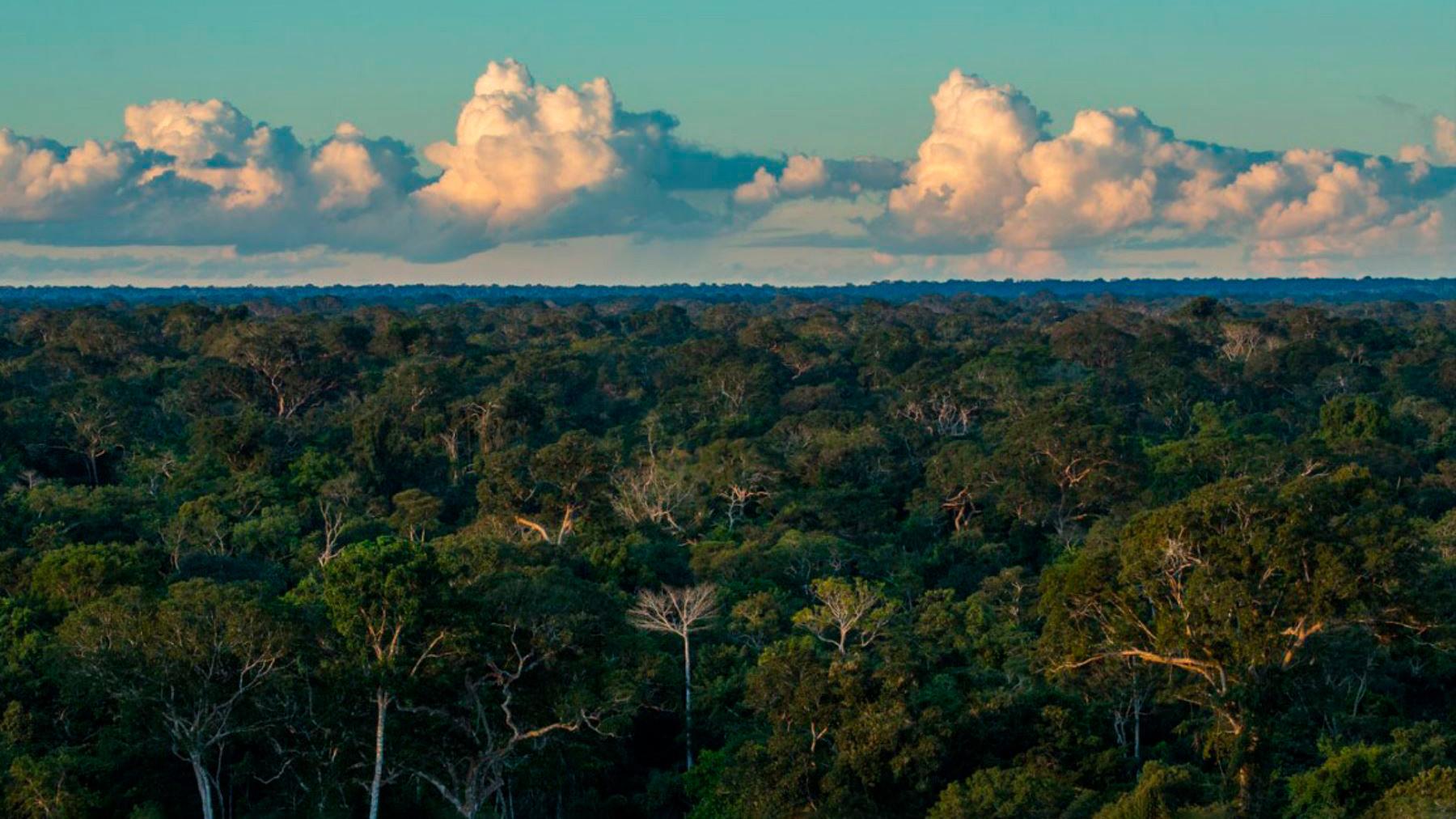 Manejo forestal sostenible en perspectiva, por MiriamCerdán Quiliano
