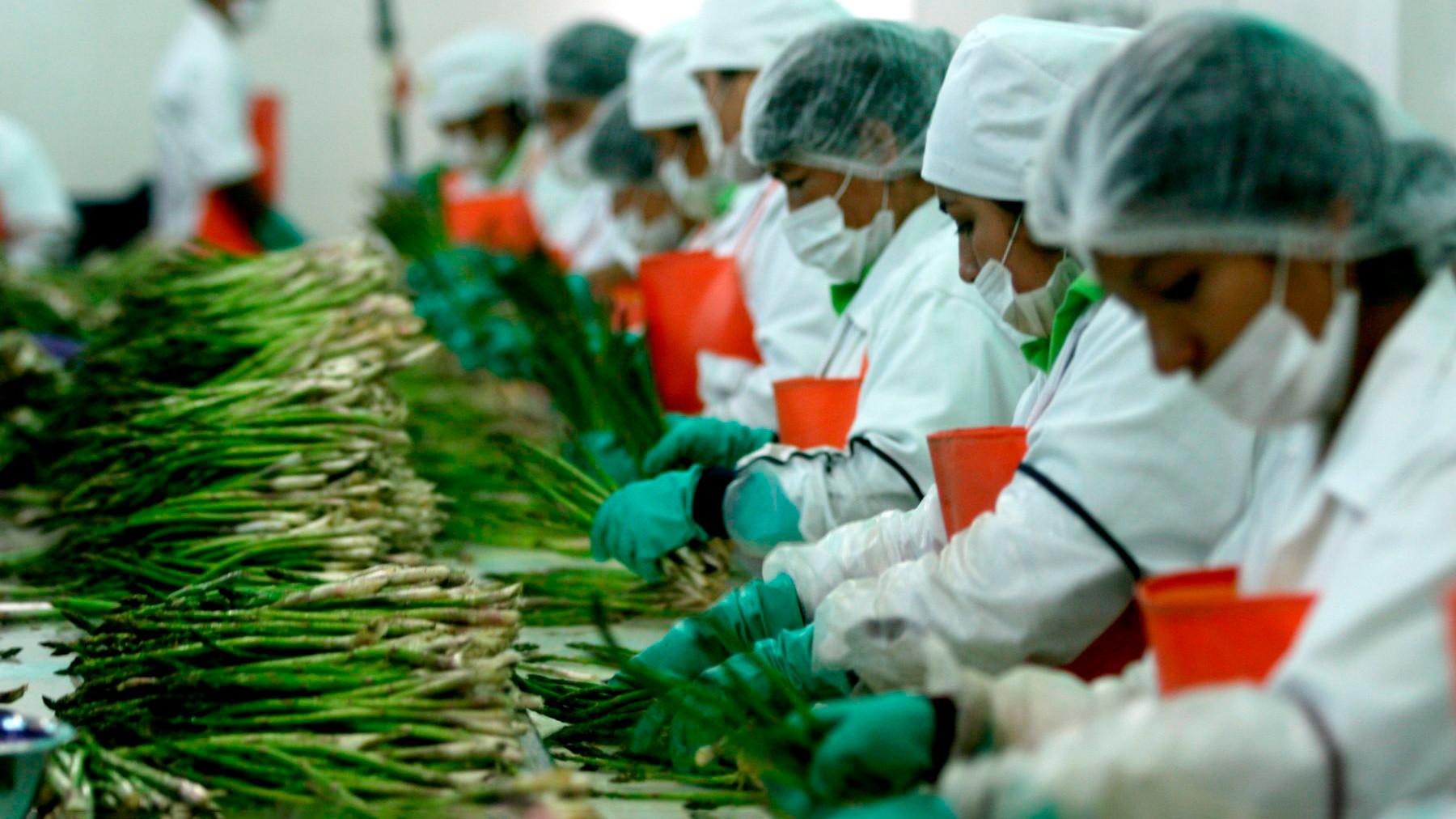 Una nueva agroindustria para el bicentenario, por Jorge Ramírez Rubio