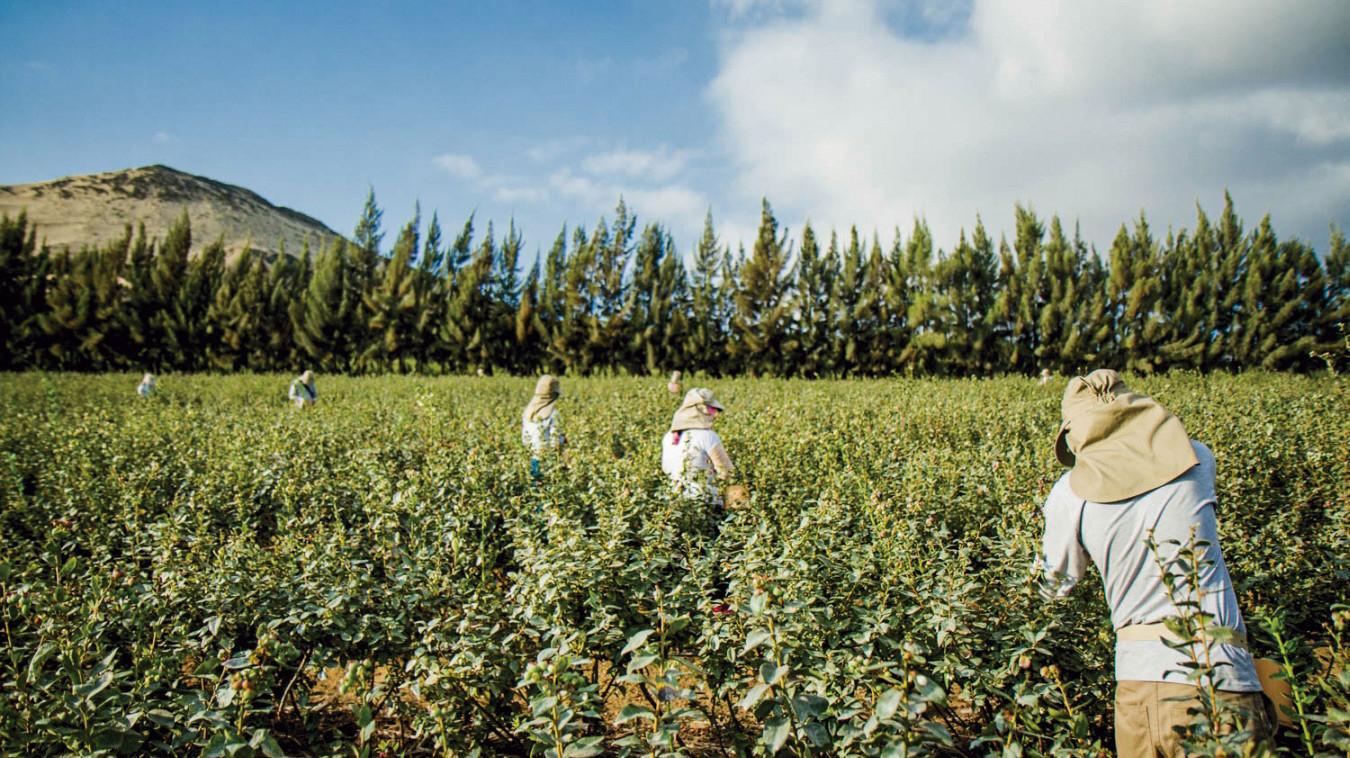 efecto-cambiario-da-un-respiro-a-las-agroexportadoras