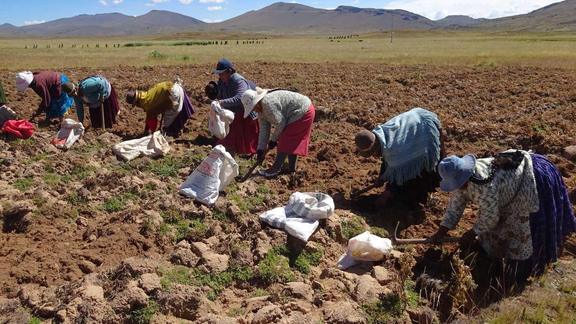 La reforma sin forma: la segunda Reforma Agraria no revoluciona la agricultura familiar