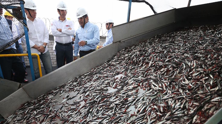 Produce adelantó el cierre de la primera temporada de pesca de anchoveta