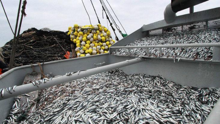 Pesca en el 2015: contra viento y marea