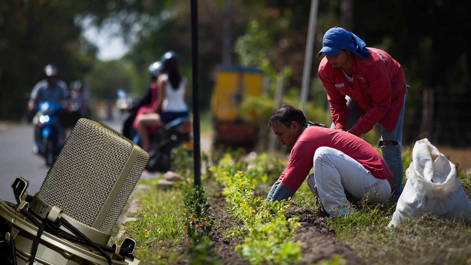 RADIO | Una mirada al impacto de la migración en el mercado laboral de Arauca