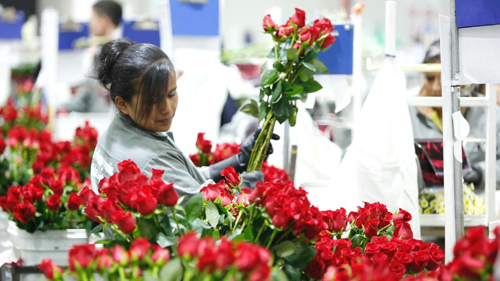 Desempleo en mujeres migrantes llegó al 31 por ciento: Dane
