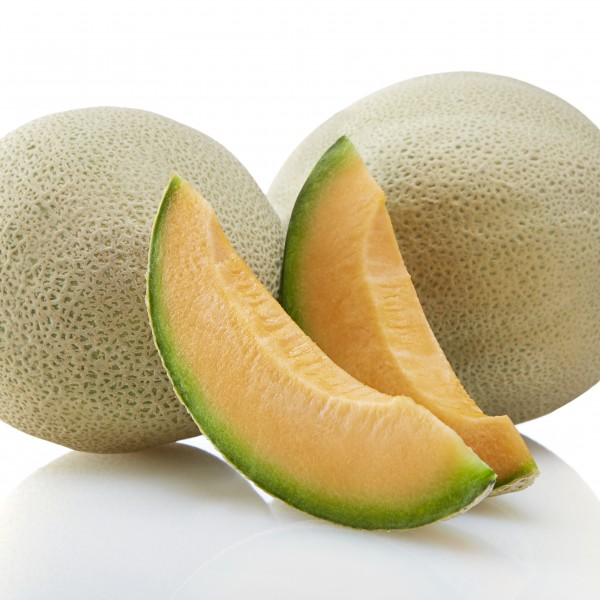 Ever Summer™ melon brand, SV6239MF melon seed