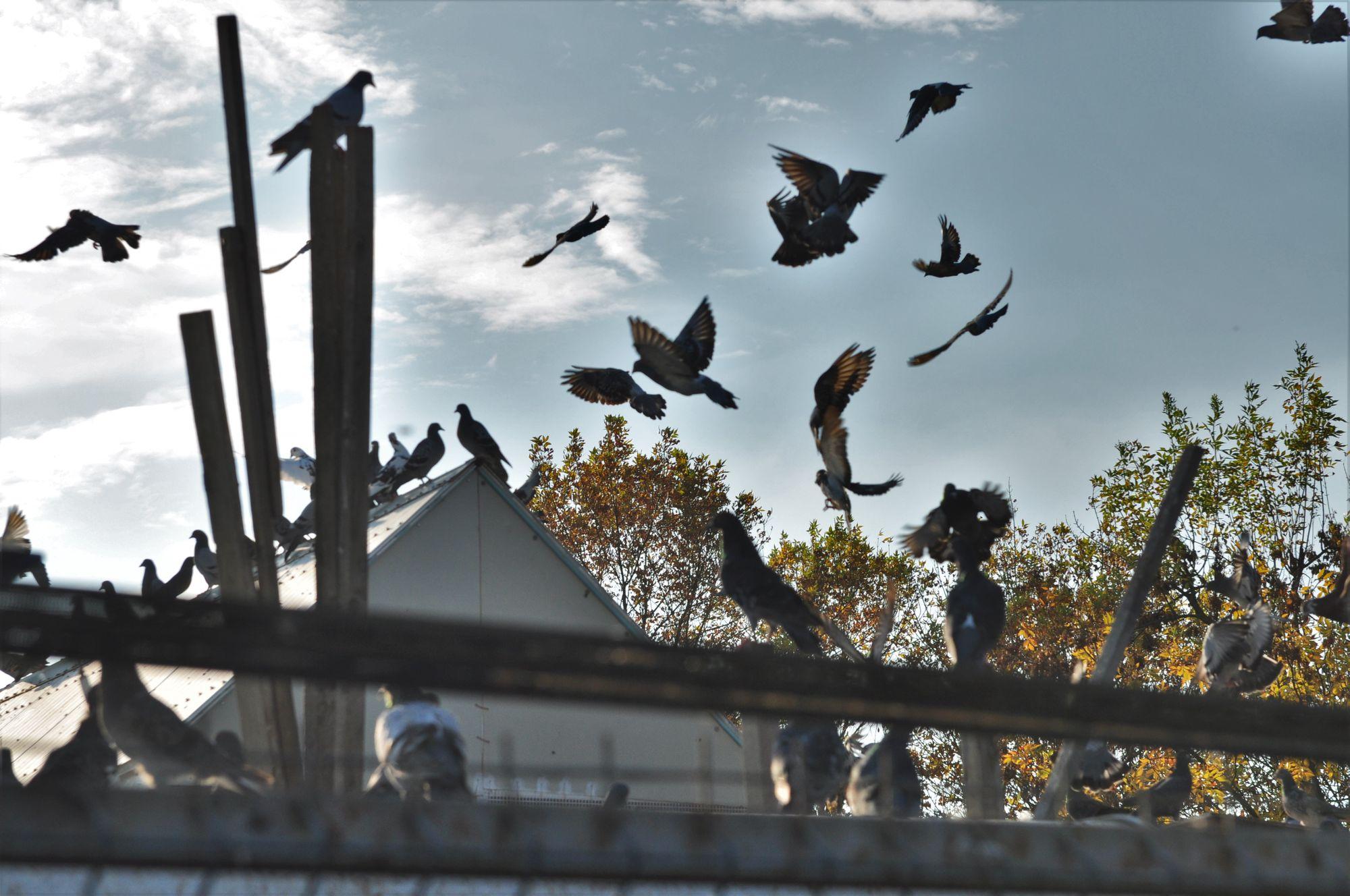 Birdcamp