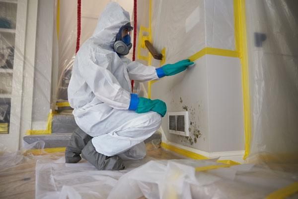Professional Mold Inspection & Remediation services doing its work