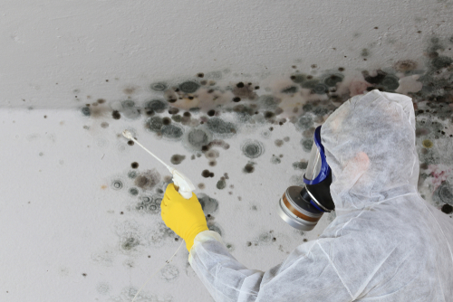 mold removal and inspection ServiceMaster by Lovejoy