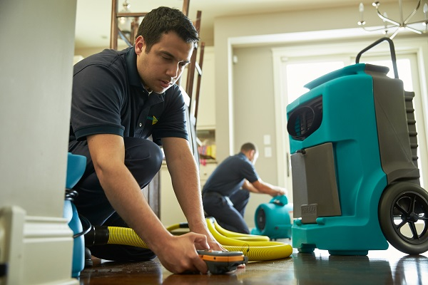 Water Extraction & Mold Remediation in Cape Coral, FL