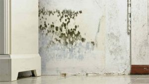 Mold Damage - ServiceMaster by Wright