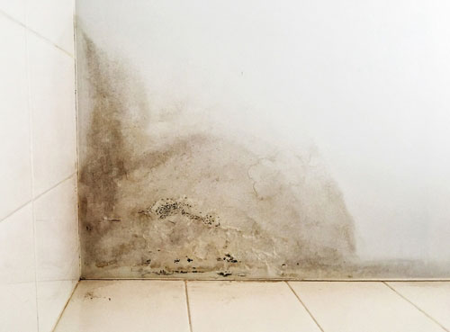 How Fast Can Mold Grow?