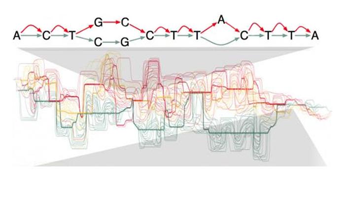 Genome Variation Slider 3