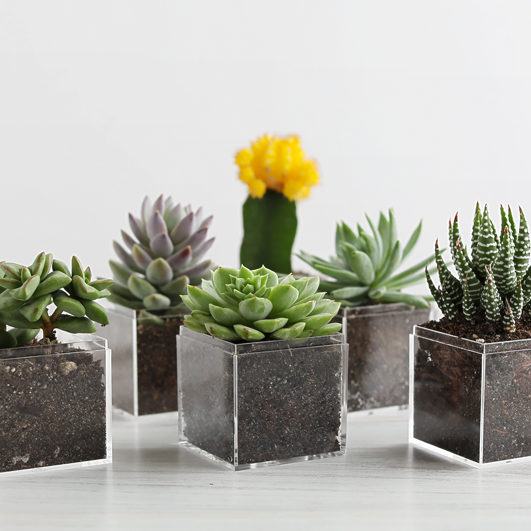 Upcycling is great. Planting new life while upcycling is even better. Take Earth Day up a notch by upcycling Sugarfina Candy Cubes into precious planters with personality!