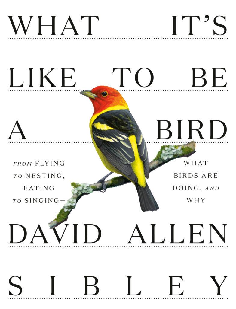 MER3dd34b6a945d080b80b4ada616028 books0510 birds 1