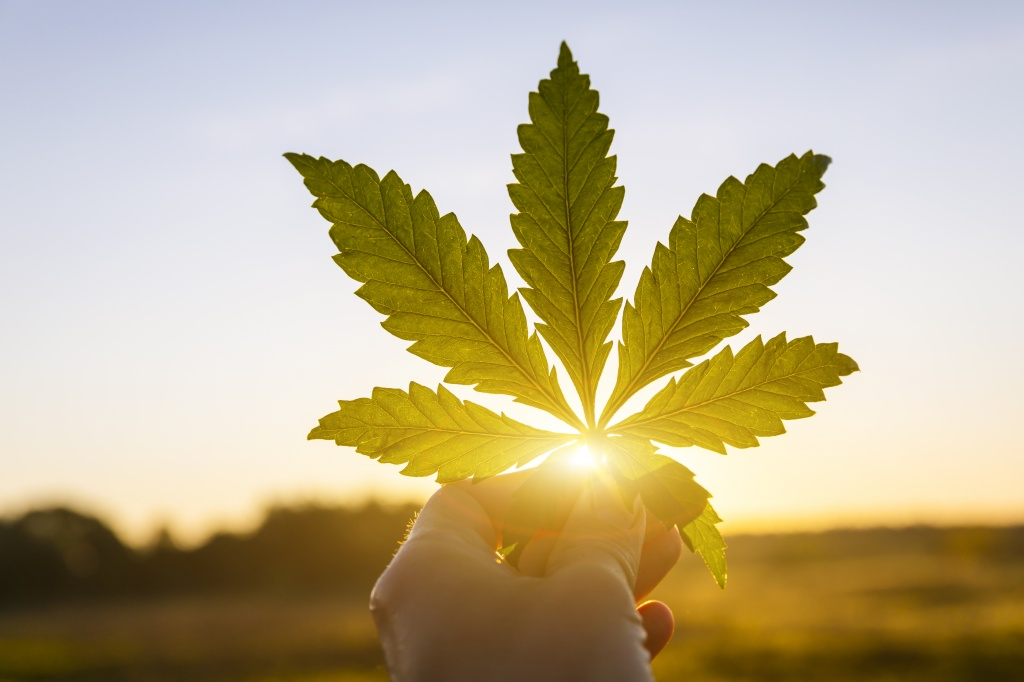 A Win for Cannabis Businesses: SAFE Banking Act Passes House of Representatives | GreenState