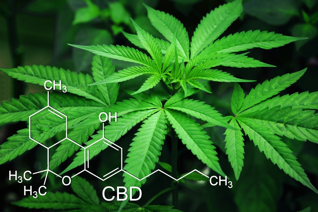High Hopes: The Science of Cannabis and THC   GreenState