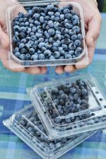Certified Organic blueberries from our farm