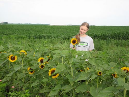 Ellen admires a perfect sunflower