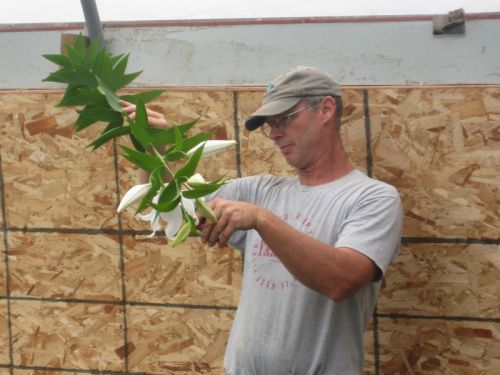 Eric cutting lilies