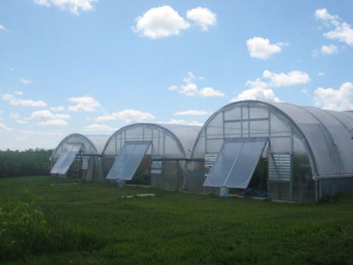 View of our three greenhouses