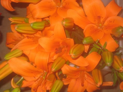 Orange October lilies