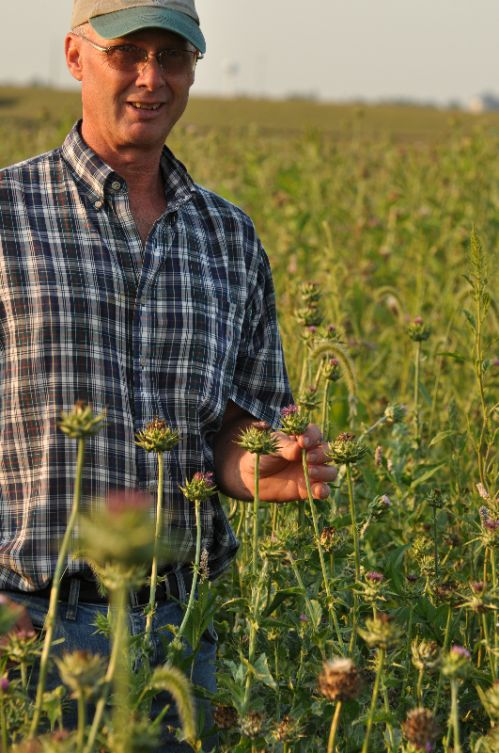Eric in the milk thistle field