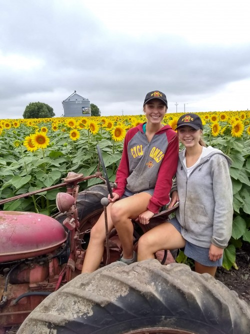 Masten twins try out the Farmall H in the sunflower field