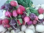 Radishes & Turnips