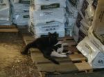 barn Kitties1