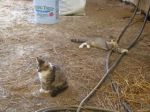 barn Kitties4