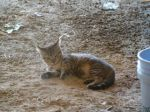 barn Kitties5