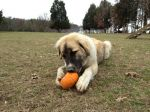 Bro with pumpkin