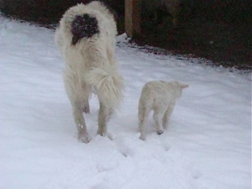 Bongo and Rachel taking a snowy stroll