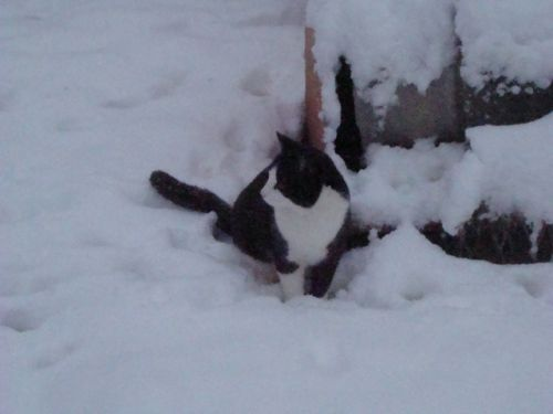 Runt checking out snow