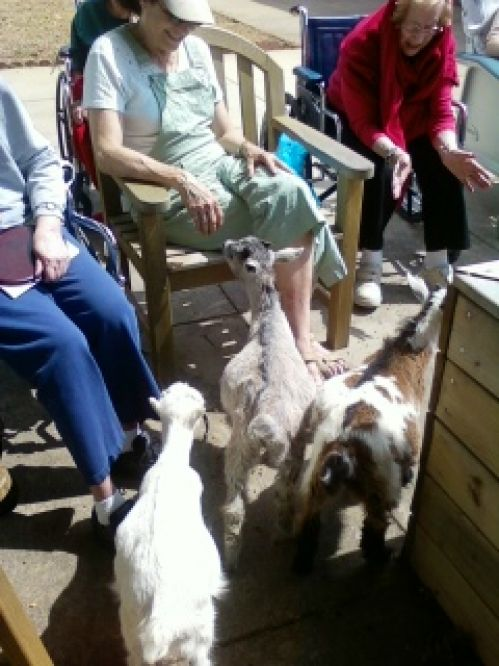 Goats at Woodview