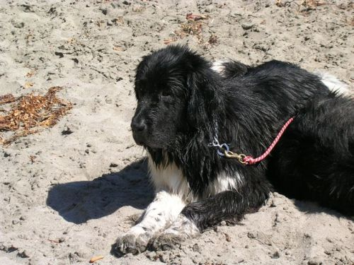 Sammy at beach