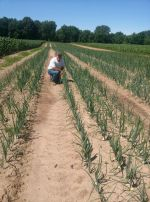 Mike is out checking on the onions we have planted.