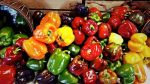 Want some peppers? We have them in all sorts of colors!