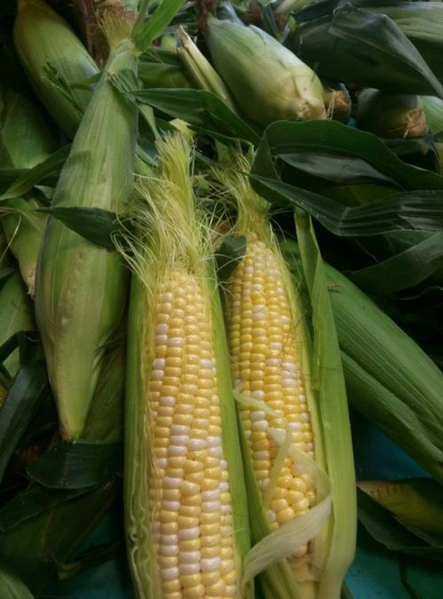 Are you hungry for some sweetcorn??