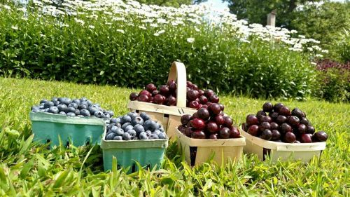 What about our FAMOUS Michigan blueberries and Traverse City cherries??